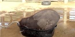 Cư dân mạng thích thú với chú voi con tắm bồn
