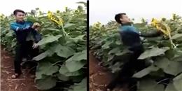 Phẫn nộ việc hai nam thanh niên bứt phá hoa ở Nghệ An