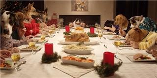 Chuyện gì sẽ diễn ra khi trên bàn tiệc Noel chỉ toàn... thú cưng?