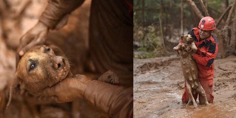 Cảm động khoảnh khắc lính cứu hỏa cứu chú chó giữa bùn lầy