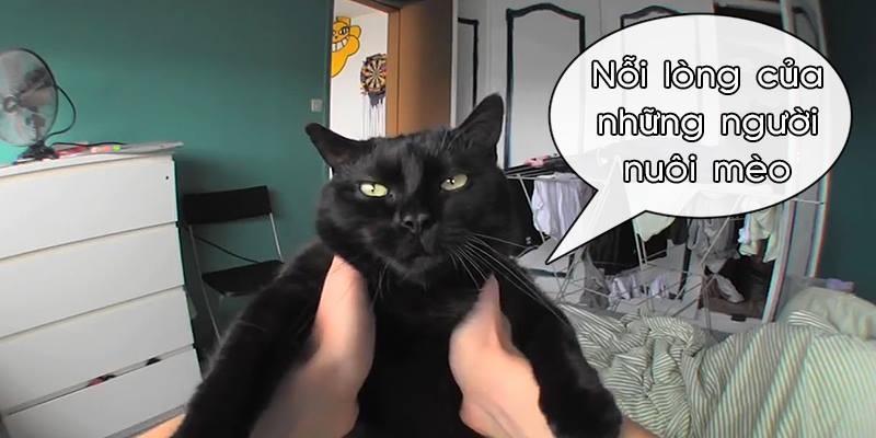 Nỗi lòng khó nói của hội những người thích nuôi mèo