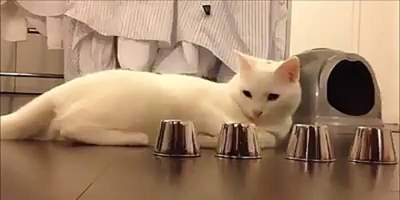 """Phát hiện chú mèo thông minh nhất quả đất khiến người xem ... """"hết hồn"""""""