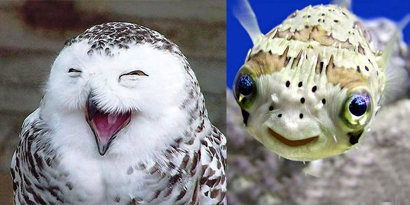 """Cười """"tét rún"""" trước những """"nụ cười mãn nguyện"""" của động vật"""