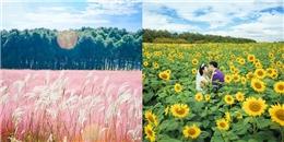7 điểm chụp hình với hoa đẹp nức tiếng của miền Nam