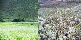 Đẹp ngất ngây những đồng hoa của miền Bắc