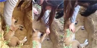 Xúc động với cô chủ khóc nức nở khi tự tay chôn chú chó cưng
