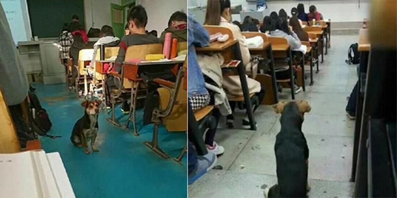 """Sinh viên Trung Quốc """"hổ thẹn"""" trước chú chó chăm học"""