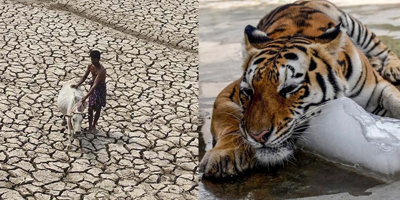 Cả thế giới phát hoảng với tin 2016 thời tiết nóng kỉ lục
