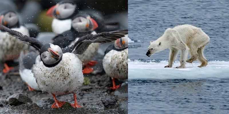 Hoang mang trước những động vật đáng yêu sắp biến mất Trái đất