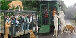 Sửng sốt với sở thú 'nhốt người trong chuồng, thả rông thú dữ'