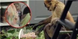 Xúc động với chú khỉ đền ơn đáp nghĩa