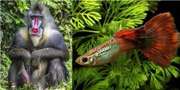 """Khám phá những loài vật mà con đực còn """"điệu"""" hơn cả con cái"""