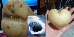 Những củ khoai tây hình thù quái đản thách bạn không ngạc nhiên