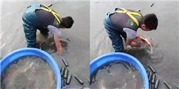 Đây là cách bắt cá chép đã trở thành 'huyền thoại' của người Nhật