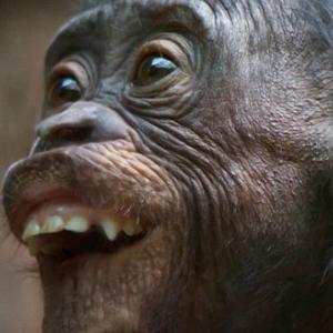 Mở đầu năm khỉ bằng những chú khỉ cực  bá đạo