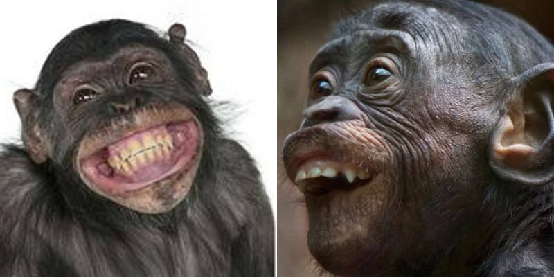 """Mở đầu năm khỉ bằng những chú khỉ cực """"bá đạo"""""""