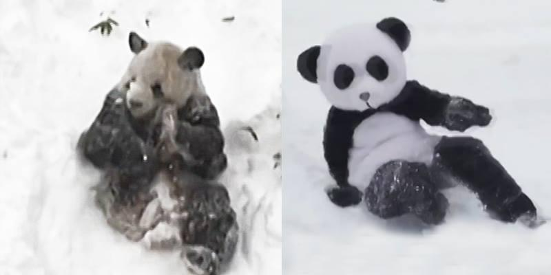 """Phát hiện gấu trúc """"phát cuồng"""" mỗi khi gặp tuyết siêu dễ thương"""