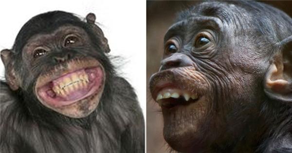 Mở đầu năm khỉ bằng những chú khỉ cực 'bá đạo'