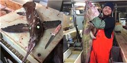 Kinh hoàng khi phát hiện quái vật cá trong truyền thuyết
