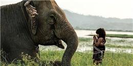 Chuyện cô bé Việt thuần hóa voi khổng lồ khiến thế giới ngỡ ngàng