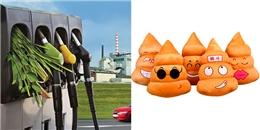 """Chúng ta sẽ """"đổ phân"""" thay vì đổ xăng khi đi xe trong tương lai?"""