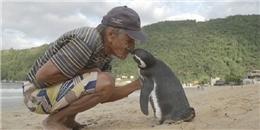 Rớt nước mắt hành động của chú cánh cụt 'tình nghĩa' nhất hệ mặt trời