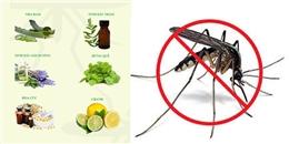 Mẹo phòng tránh muỗi không dùng hóa chất
