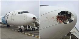 Hi hữu: mũi máy bay bị vỡ sau khi đâm phải… một con chim