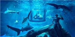 Cơ hội ngủ một đêm với... 35 cá mập ở Paris