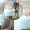 Hoảng hồn với người giúp việc pha nước tiểu vào cốc sinh tố cho chủ nhà