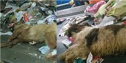 Cộng đồng mạng phẫn nộ với 'xác 2 chú chó bị vứt trong xe rác'