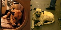 Truyền thuyết về biệt đội chó 'khôn' nhất lịch sử khiến bạn ngỡ ngàng