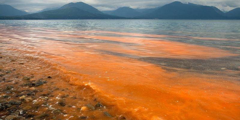 Những sự thật về thủy triều đỏ khiến bạn giật mình