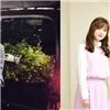 Những màn cầu hôn  như trên phim  của sao Hàn siêu lãng mạn