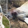 Sư tử trắng bị đầu độc và chặt đầu gây phẫn nộ