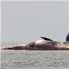 Cá voi chết ở biển Nghệ An