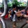 Bắt được  trăn thần  dài 5m, nặng 37kg tại Nghệ An