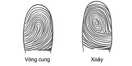 Nhìn dấu vân tay để biết tính cách của bạn