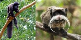 'Phát sốt' với những động vật có râu độc dị nhất