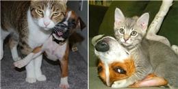 Khi các bé mèo muốn 'thống trị' những anh bạn chó