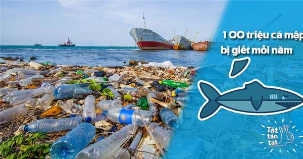 [Tất Tần Tật] Bạn nghĩ đại dương sẽ còn tồn tại đến bao lâu?