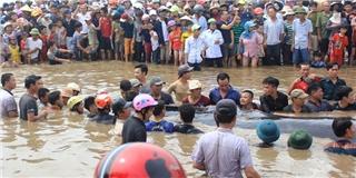 Dân hò reo khi giải cứu thành công cá voi khổng lồ