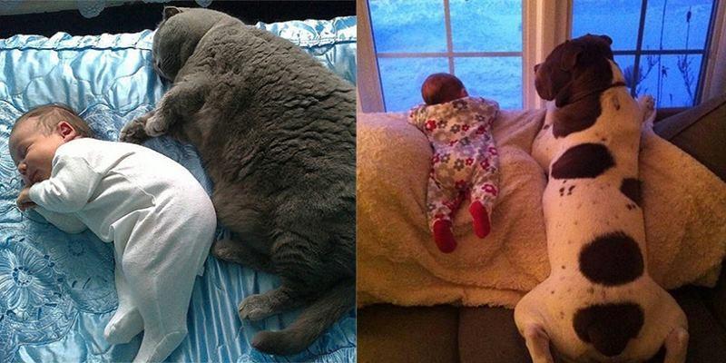 24 bức ảnh siêu đáng yêu của trẻ con cùng người bạn thú cưng