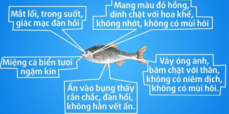 Nguyên tắc chọn cá biển an toàn, không hóa chất