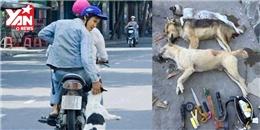 Phẫn nộ với hành động thuốc chó đến chết rồi cướp