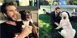 yan.vn - tin sao, ngôi sao - Tan chảy trước hình ảnh hôn phu Miley và những chú chó được nhận nuôi