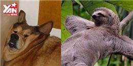 Mùa hè đến, các con vật cũng muốn 'lười chảy thây' như ai