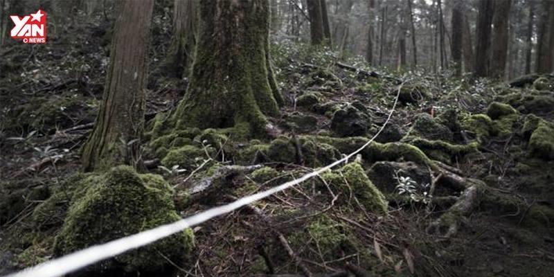 """Giải mã bí ẩn lạnh gáy đằng sau khu rừng tự sát """"trứ danh"""" ở Nhật Bản"""