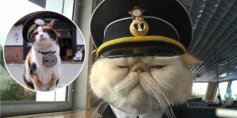 """Đây là cách loài mèo từng bước """"thống trị"""" thế giới loài người"""