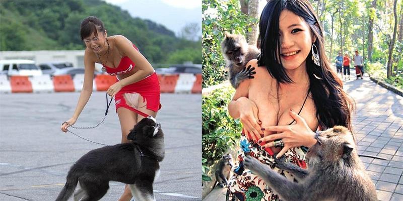 Trước phụ nữ, đến động vật cũng nổi máu dê xồm